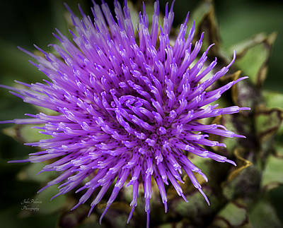 Photograph - Blooming Artichoke Thistle by Julie Palencia