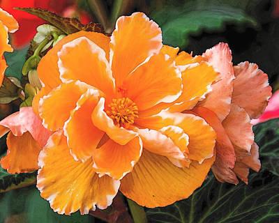 Blooming Begonia Image 1 Art Print