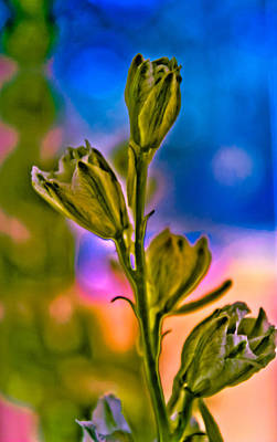 Photograph - Blooming Buds by Connie Dye