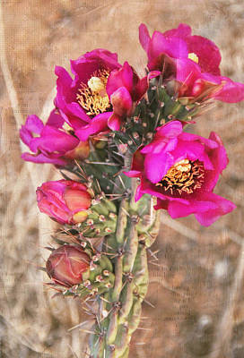 Photograph - Blooming Cactus Canvas by Jemmy Archer