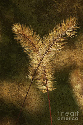 Blooming Grass Abstract Art Print by Heiko Koehrer-Wagner