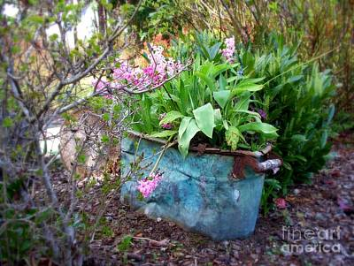 Spring Photograph - Blooming Hyacinths In Vintage Tub by Tanya  Searcy