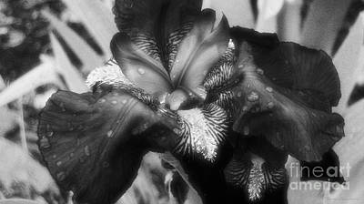 Blooming In Black And White Art Print by Mkaz Photography