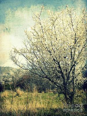 Photograph - Blooming In White by Ioanna Papanikolaou