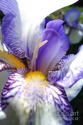 Pasta Al Dente - Blooming Iris 6 by Jacqueline Athmann