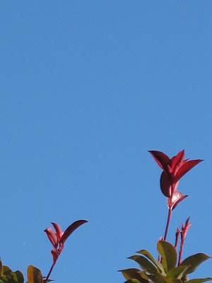 Blooming Leaves Art Print