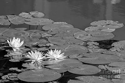 Photograph - Blooming Lilypad by Brad Marzolf Photography