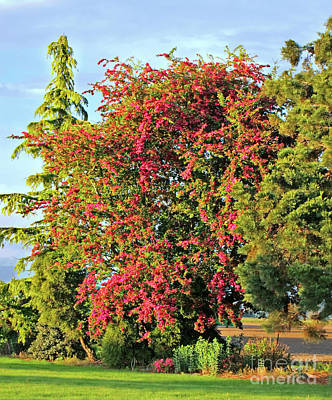 Photograph - Blooming Pink Hawthorn Tree Crataegus Art Prints by Valerie Garner