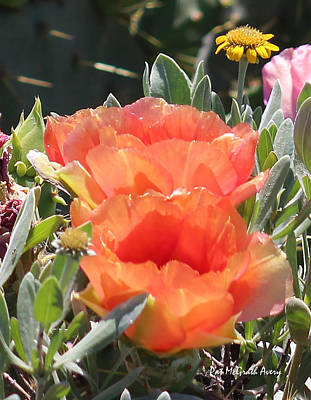 Photograph - Blooming Prickly Pear by Pat McGrath Avery