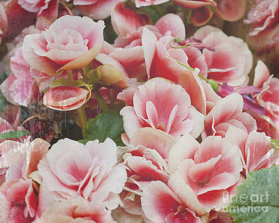 Blooming Roses Art Print