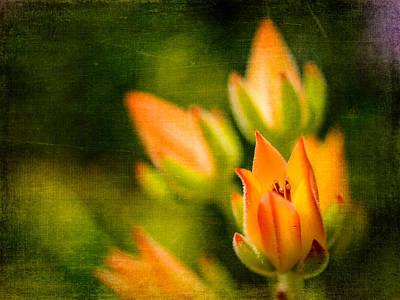 Blooming Succulents IIi Art Print