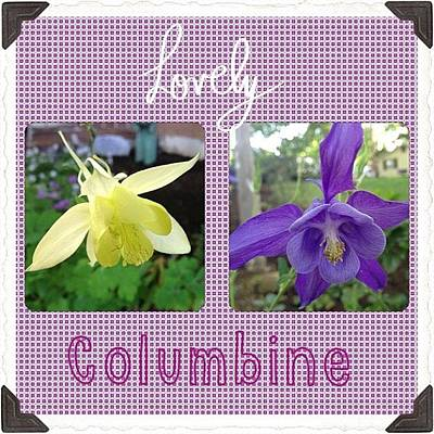 Florals Photograph - Blooming Today. #lovely #columbine by Teresa Mucha