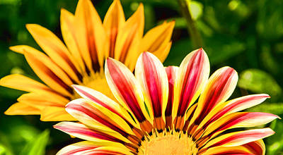 Photograph - Blooming Treasures by Jordan Blackstone