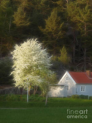 Blooming Tree Art Print by Lutz Baar