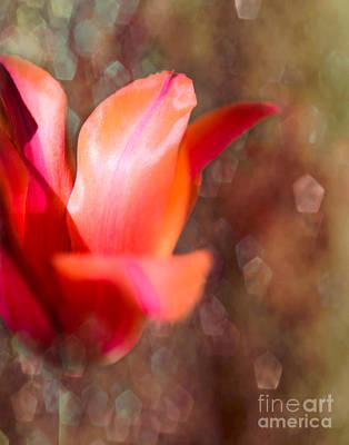 Blooming Tulip Bokeh Print by Sonja Quintero