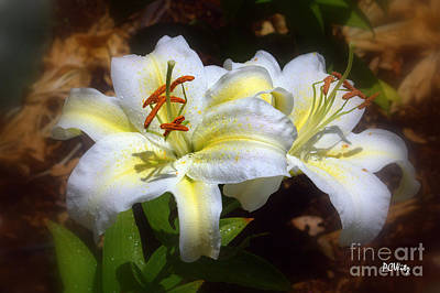 Photograph - Bloom'n Lilies by Patrick Witz