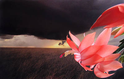 Print featuring the photograph Blooms Against Tornado by Katie Wing Vigil