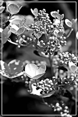 Blooms And Berries In Black And White Art Print