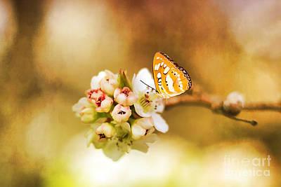 Blooms And Butterflies Art Print by Darren Fisher