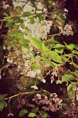 Photograph - Blooms In The Branches by Cathie Tyler