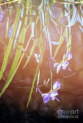 Photograph - Blooms Of Reflection by Michael Hoard