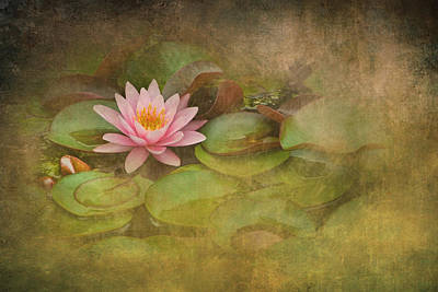 Photograph - Blossom Among The Lily Pads by Randall Nyhof