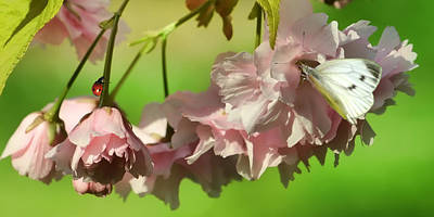 Butterflies Photograph - Blossom And Bugs by Sharon Lisa Clarke
