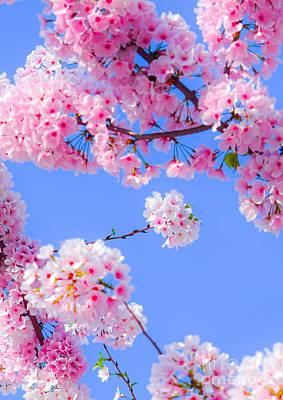 Photograph - Blossom Bokeh by Jeff at JSJ Photography