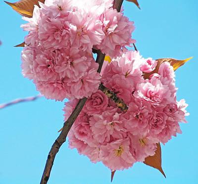 Blossom Bouquet Art Print