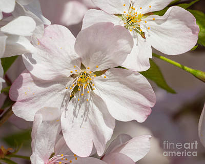 Photograph - Blossom by Dale Nelson