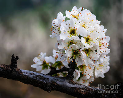 Blossom Gathering Art Print by Terry Garvin