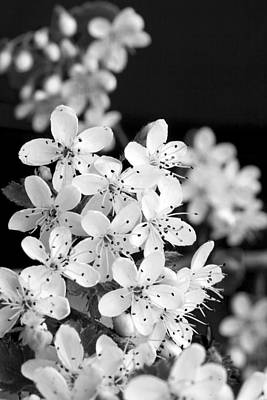 Photograph - Blossom In Black And White by Robert Camp