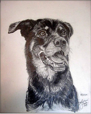 Rottweiler Puppy Drawing - Blossom by Lisamarie Modell