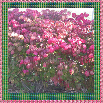 Champion Mixed Media - Blossom Pink Before Fall Colors In Oakville Ontario Canada  Appreciating Nature It Deserves A Great  by Navin Joshi