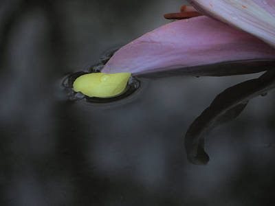 Blossom Rain 31 Art Print by Georg Kickinger