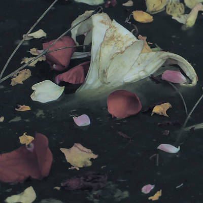 Blossom Rain 32 Art Print by Georg Kickinger