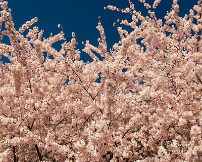 Photograph - Blossom Sky by Dale Nelson