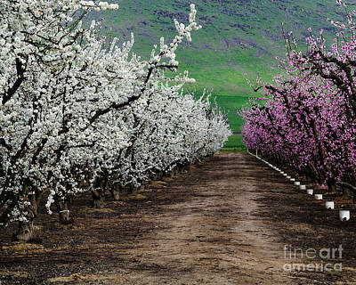 Blossom Standoff Art Print by Terry Garvin