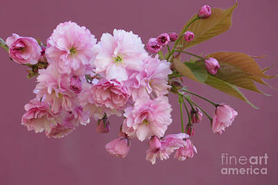 Blossom Standouts Art Print by Frank Townsley