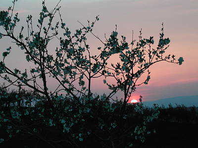 Blossom Sunset Art Print by Dorothy Berry-Lound