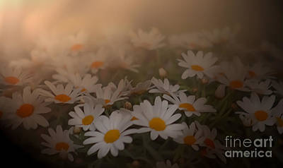Photograph - Blossom by Sylvia  Niklasson