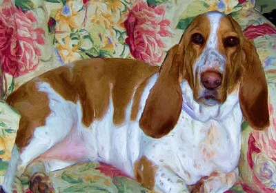 Digital Art - Blossom The Bassett Hound by Liz Evensen