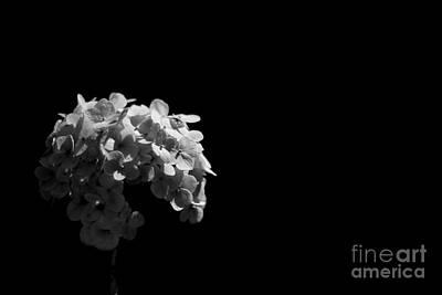 Photograph - Blossom by Vishakha Bhagat