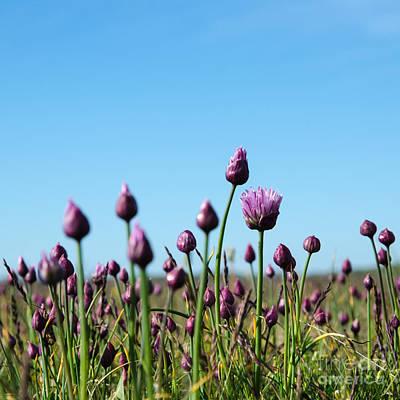 Photograph - Blossom Wild Garlic by Kennerth and Birgitta Kullman