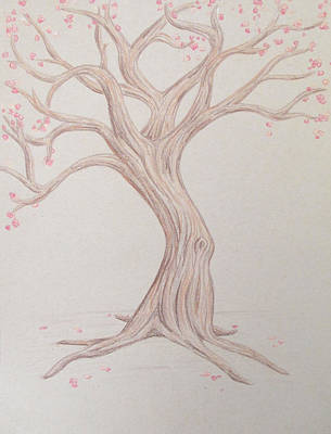 Cherry Trees Drawing - Blossoming by Austin Beal
