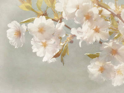 Blossoming Cherry Art Print by Bernie  Lee
