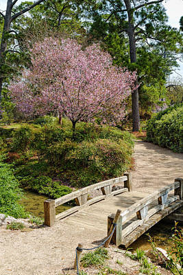 Photograph - Blossoming Cherry Tree At Houston Japanese Garden - Hermann Park by Silvio Ligutti