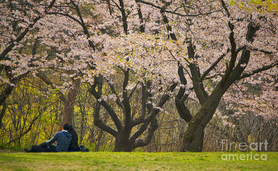 Photograph - Blossoming Love Under The Cherry Blossoms by Gerda Grice