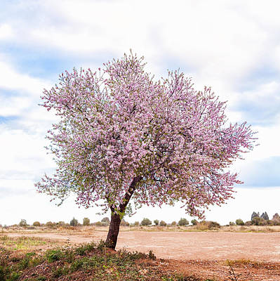 Blossoming Pink Almond Tree Prunus Art Print by Maika 777