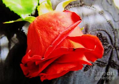 Art Print featuring the photograph Blossoming Red by Robyn King